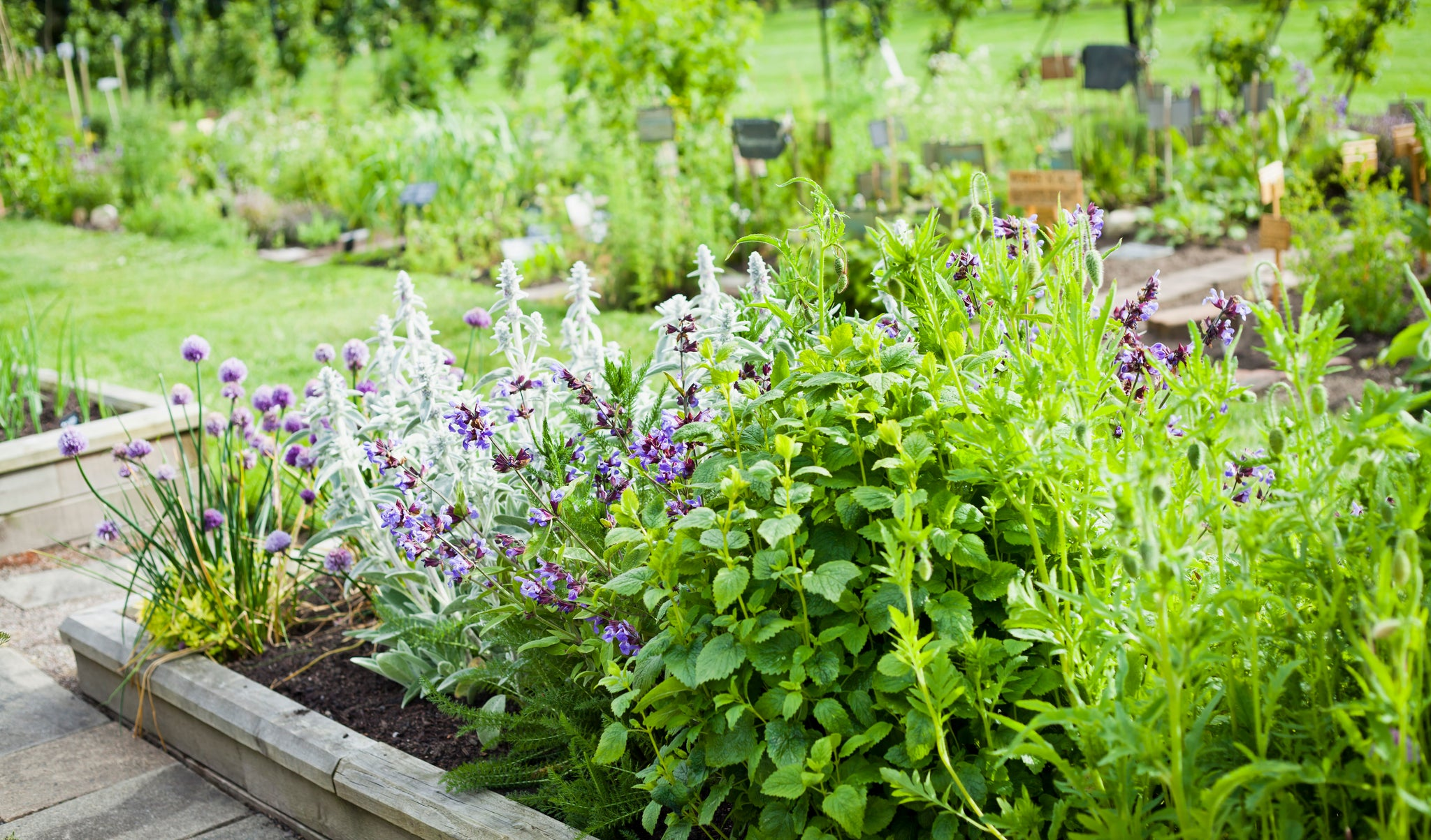 Healthy Lifestyle: Cultivate Healing Herbs in Your Garden