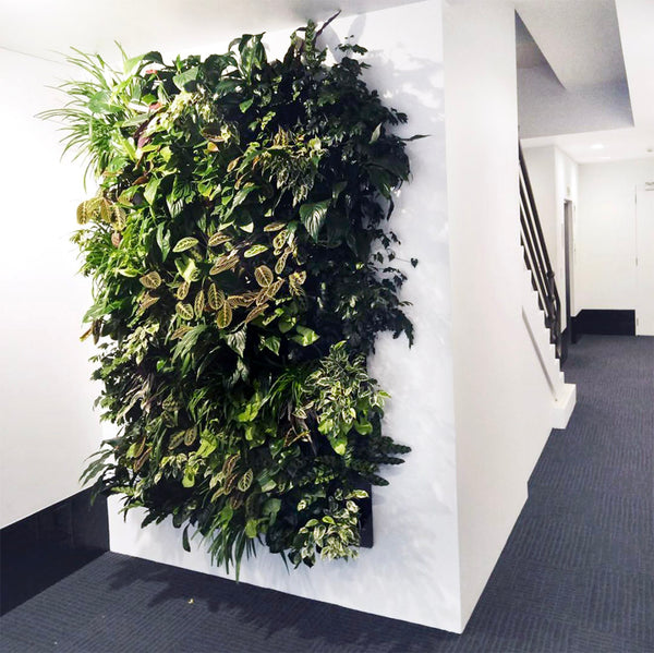 Hire Plants Wally Pro Pocket Vertical Garden Wall