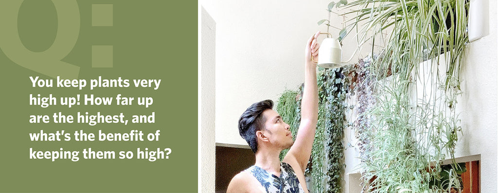 You keep plants very high up! How far up are the highest, and what's the benefit of keeping them so high?