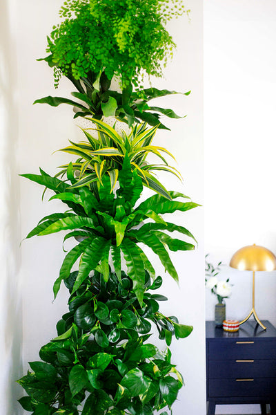 Dabito Plant Wall Wally Eco Planters