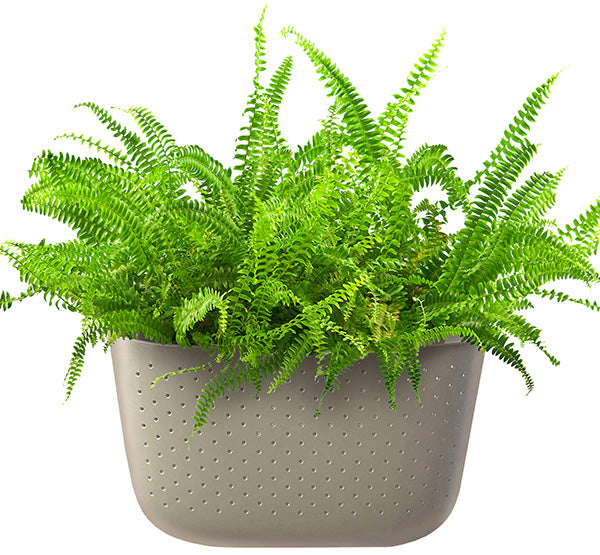 Kimberly Queen Fern in Wally Eco Stone