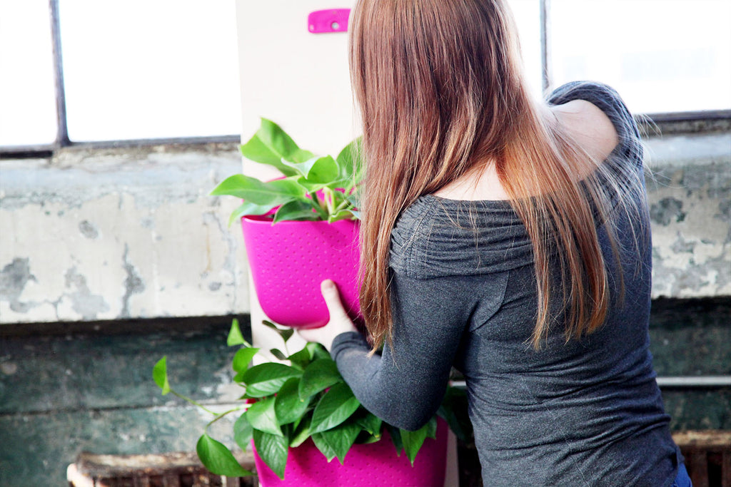 Installing the planters Galentine's Day Plant Wall Project with Wally Eco Planters