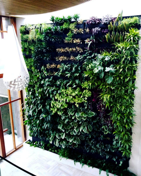 Hire Plants Wally Pro Pocket Vertical Garden Wall 7