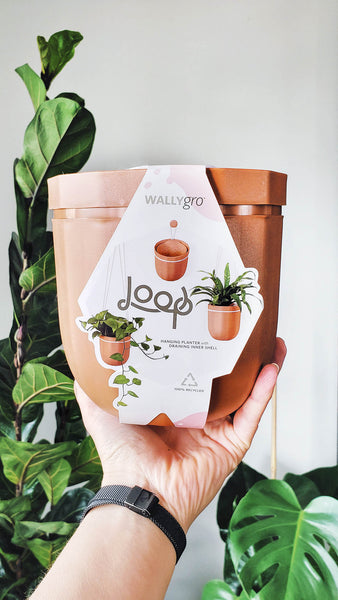 Little and Luxe | WallyGro Terracotta Loop