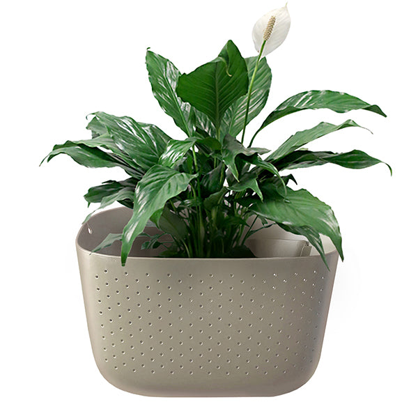 Peace Lily in Wally Eco Stone