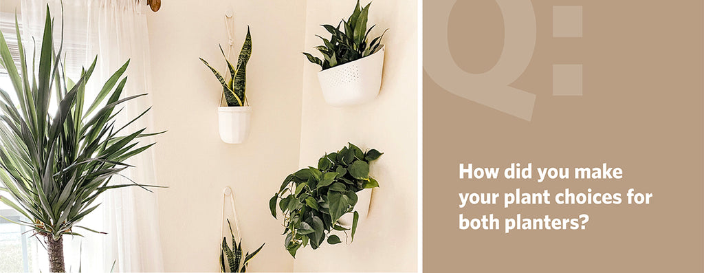 How did you make your plant choices for both planters?