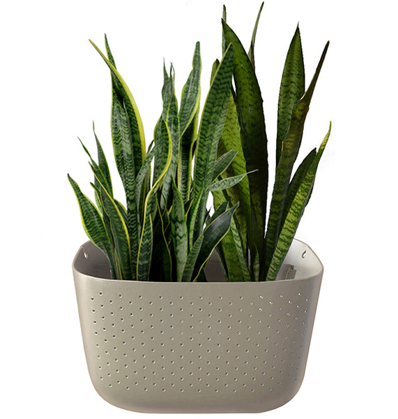 Snake Plant in Wally Eco Stone