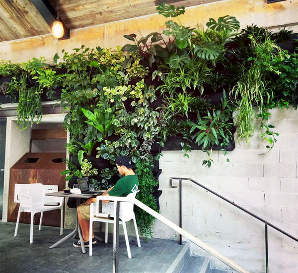 Hire Plants Wally Pro Pocket Vertical Garden Wall 3