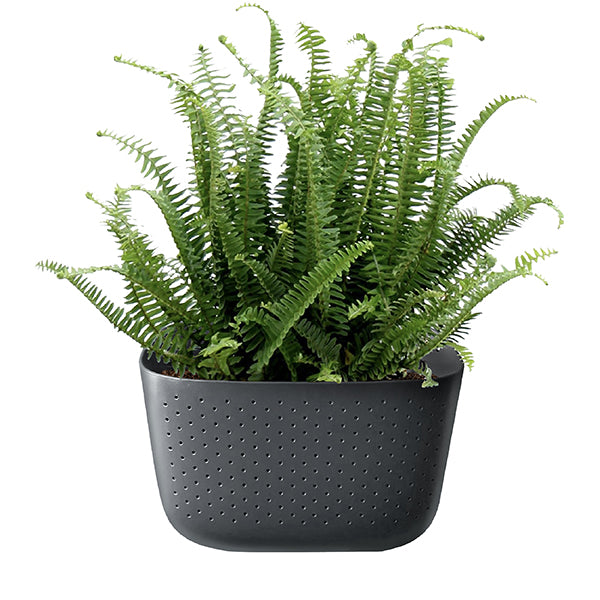 Kimberly Queen Fern in Wally Eco Charcoal