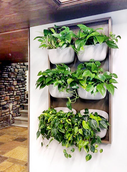 Framed Vertical Garden using Wally Eco