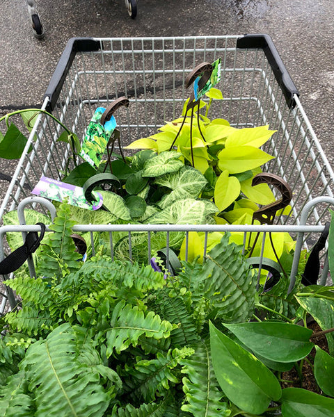 Shopping for plants