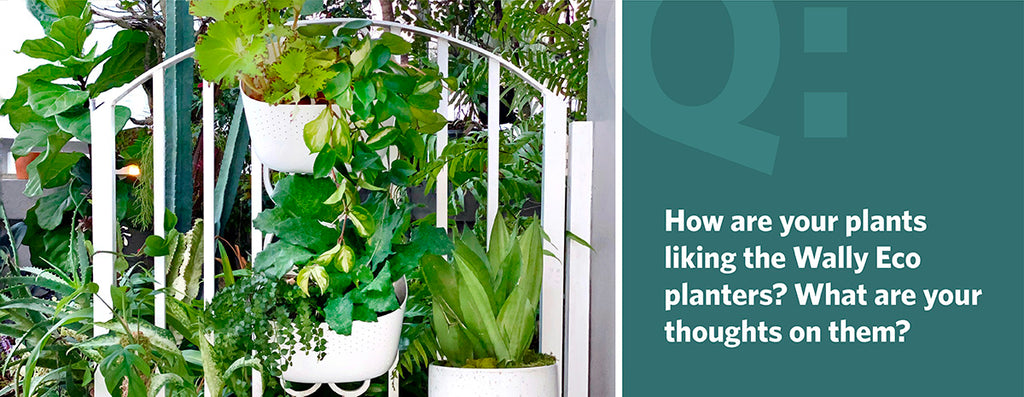 How are your plants liking the Wally Eco planters? What are your thoughts on them?