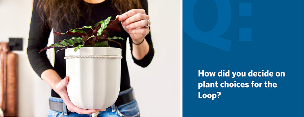 How did you decide on plant choices for the Loop?