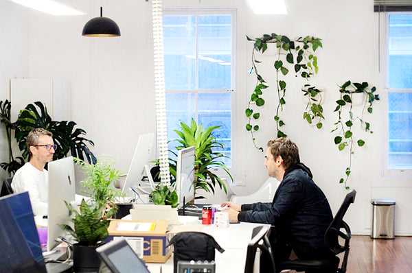 The Next Episode Plant Wall Office Space