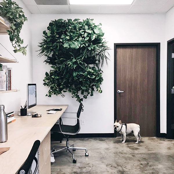 Nordengoods office plant wall