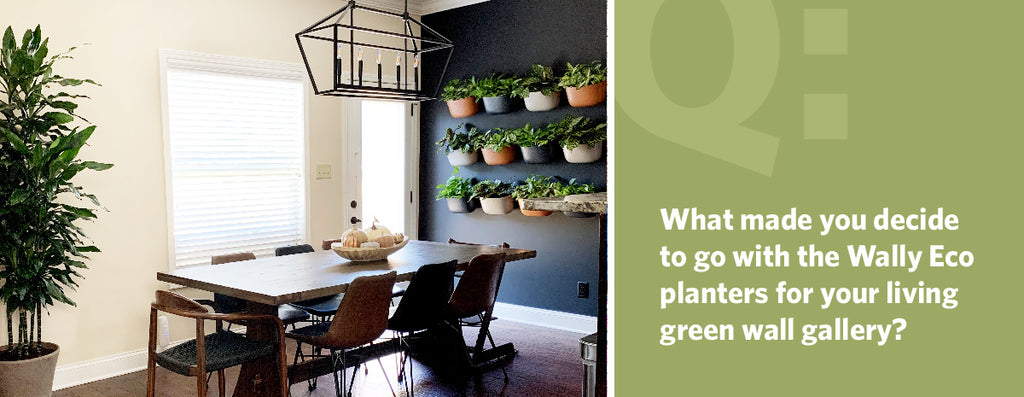 What made you decide to go with the Wally Eco planters for your living green wall gallery?