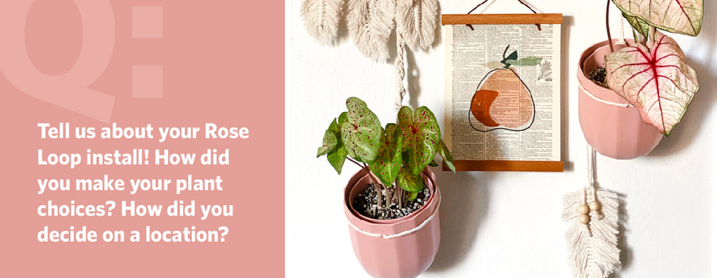 Tell us about your Rose Loop install! How did you make your plant choices? How did you decide on a location?