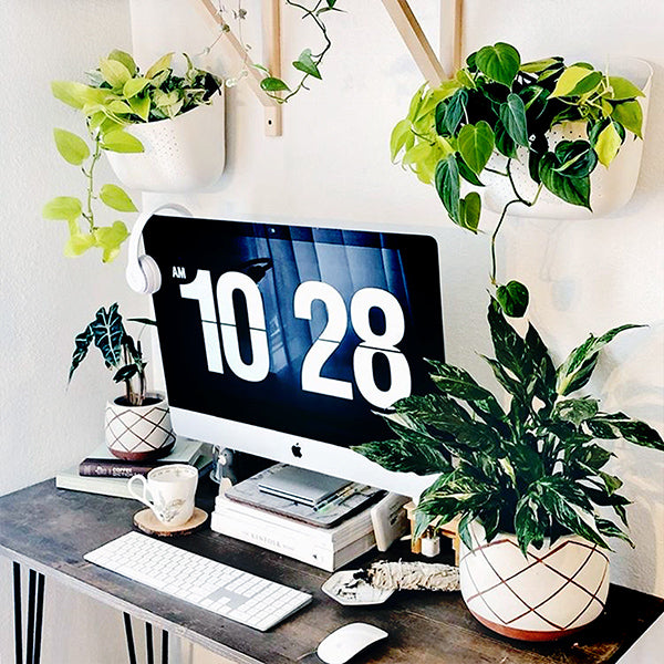 theplantvisual Wally Eco plant wall office