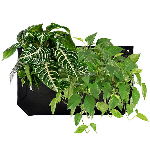 Wally Pro 1 Black Vertical Garden Wall Planter - Planted