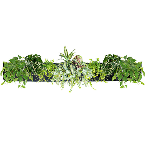 Wally Pro 5 Black Vertical Garden Living Wall Planter Pocket Planted