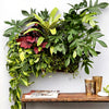 Wally Pro 1 Black Vertical Garden Wall Planter
