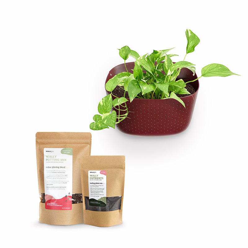 Eco Brick Plant Kits