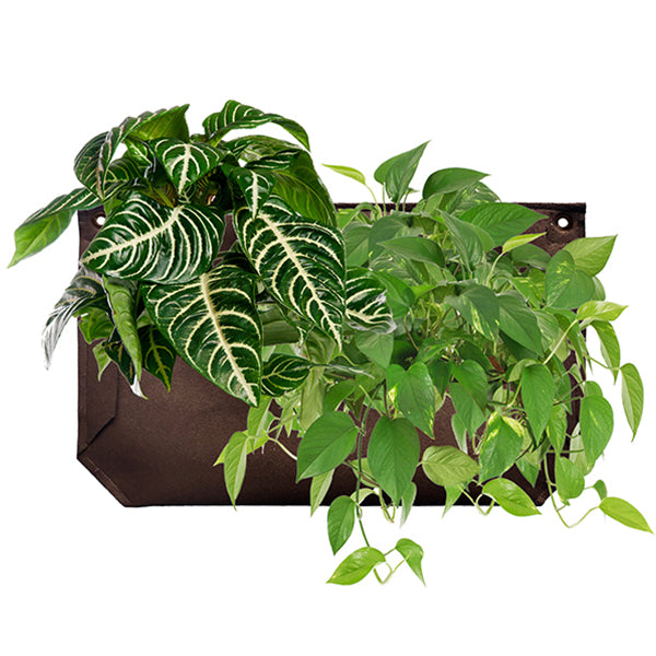 Wally Pro 1 Chocolate Living Wall Planter Planted