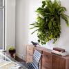 Wally Pro 1 Chocolate Living Wall Planter