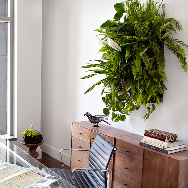 Wally Pro 1 Living Wall Planter Installation Example