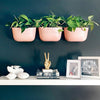Wally Eco Rose Vertical Garden Wall Planter