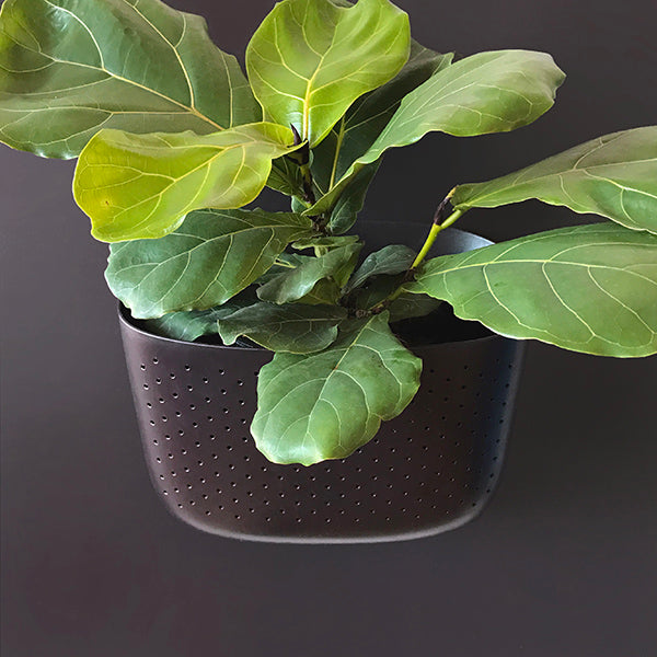 Wally Eco Espresso Living Wall Planter Front View