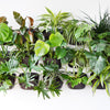 Wally Eco Espresso Vertical Garden Wall Planter