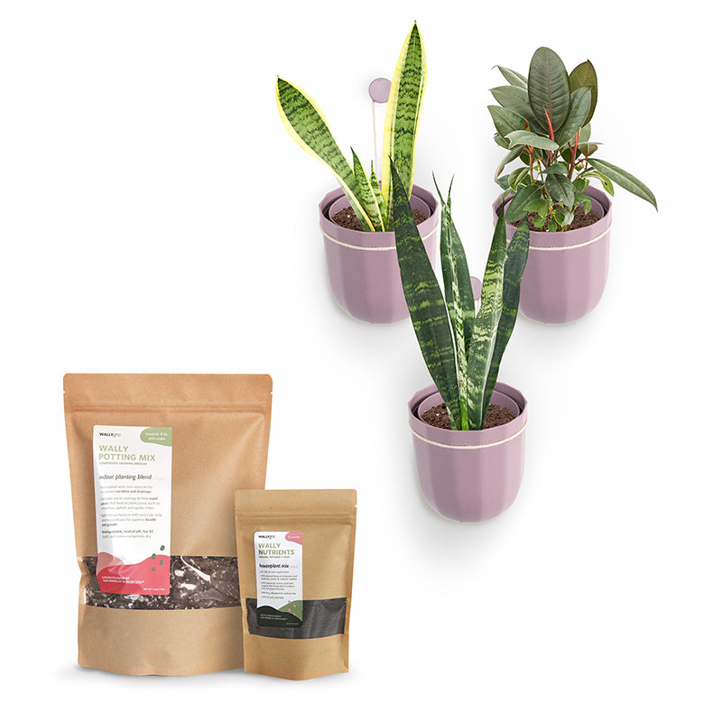 Loop Lavender Plant Kits