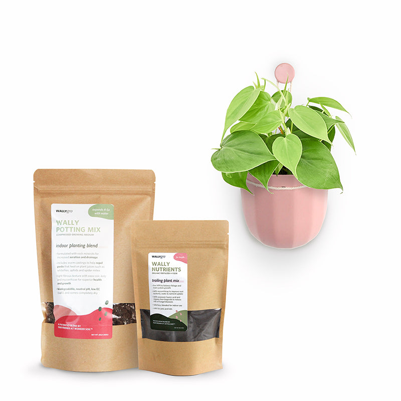 Loop Rose Plant Kits
