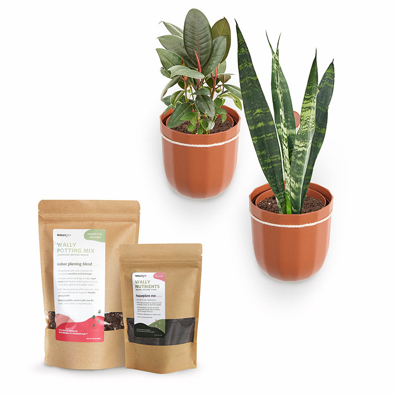 Loop Terracotta Plant Kits