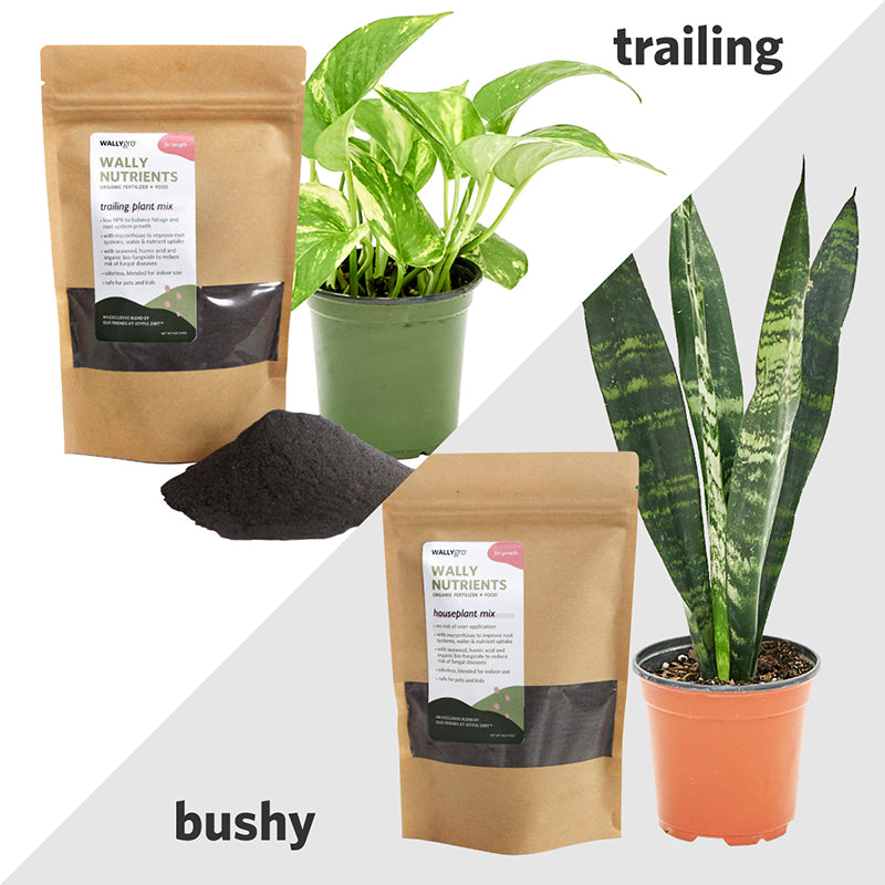 Loop White Plant Kits