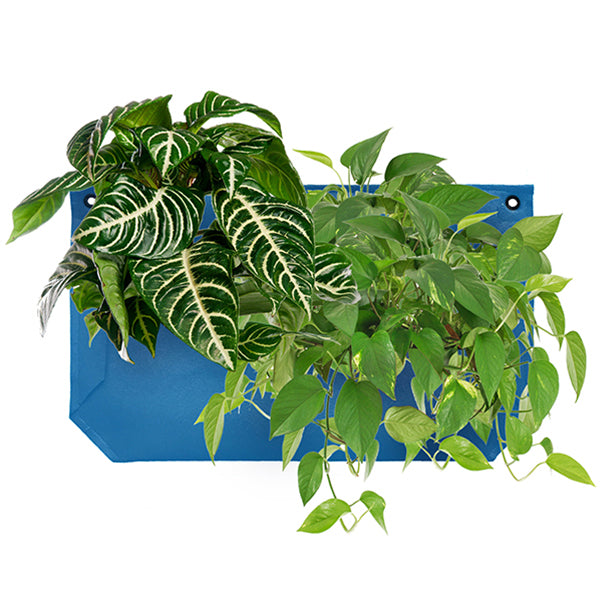 Wally Pro 1 Peacock Living Wall Planter Pocket