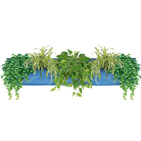 Wally Pro 3 Peacock Living Wall Planter Pocket Planted