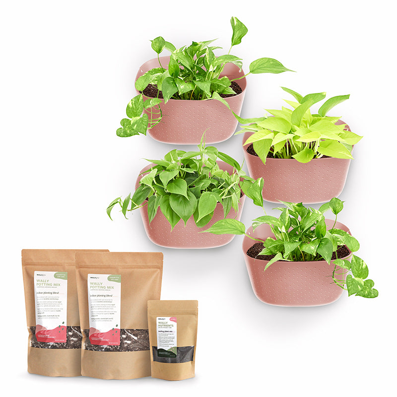Eco Rose Plant Kits