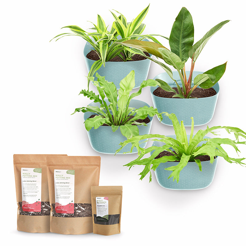 Eco Spa Plant Kits