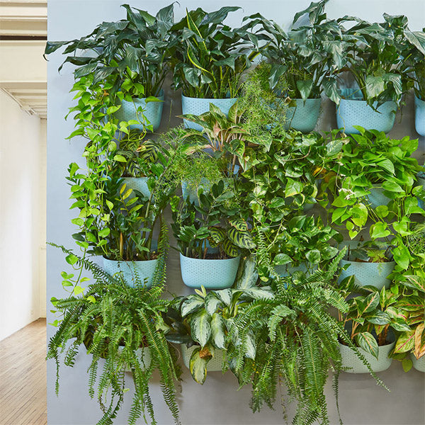 Wally Eco Spa Vertical Garden Wall Planter Installation Example