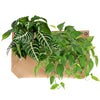 Wally Pro 1 Tan Living Wall Planter Pocket