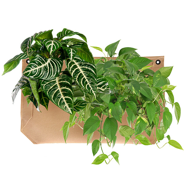 Wally Pro 1 Tan Living Wall Planter Pocket Planted