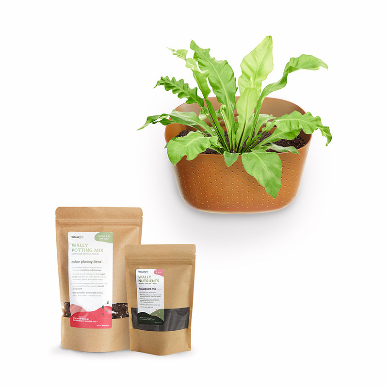 Eco Terracotta Plant Kits