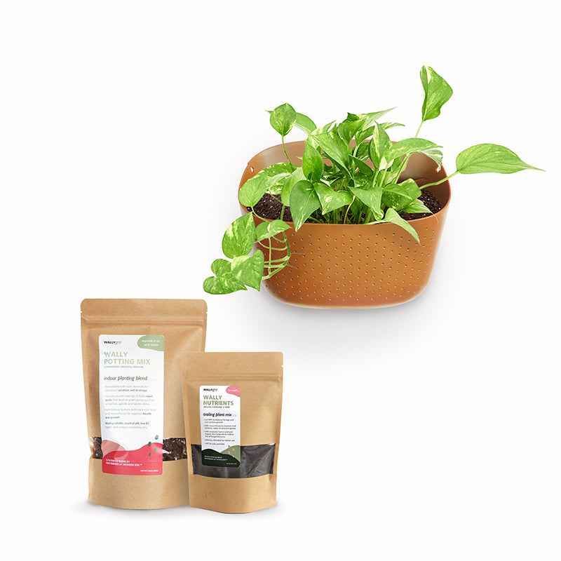 Eco Terracotta Plant Kits (backordered shipping 12/16)
