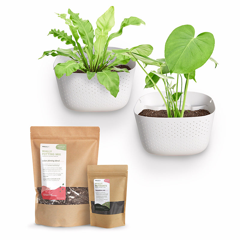 Eco White Plant Kits