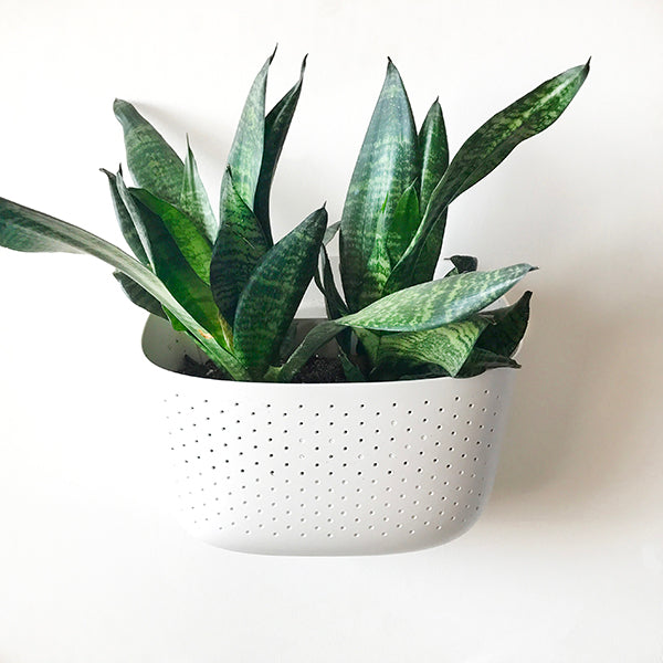 Wally Eco Brick XO White Wall Planter 4 Pack