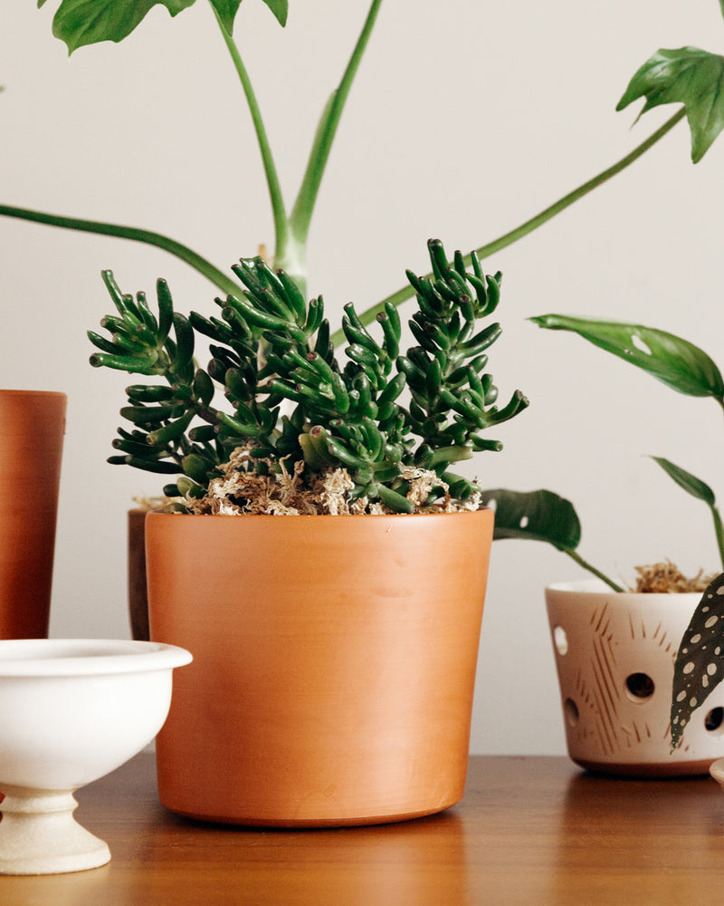 Caring for Terracotta Pots 101