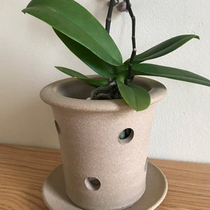 "Orchid Pot With Holes: Oak Toast 3.75: H x 4.75""D"
