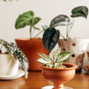 "Pedestal Bowl: Soft-as-Silk Mini Plant Pot 3.5""H x 3.5""D"